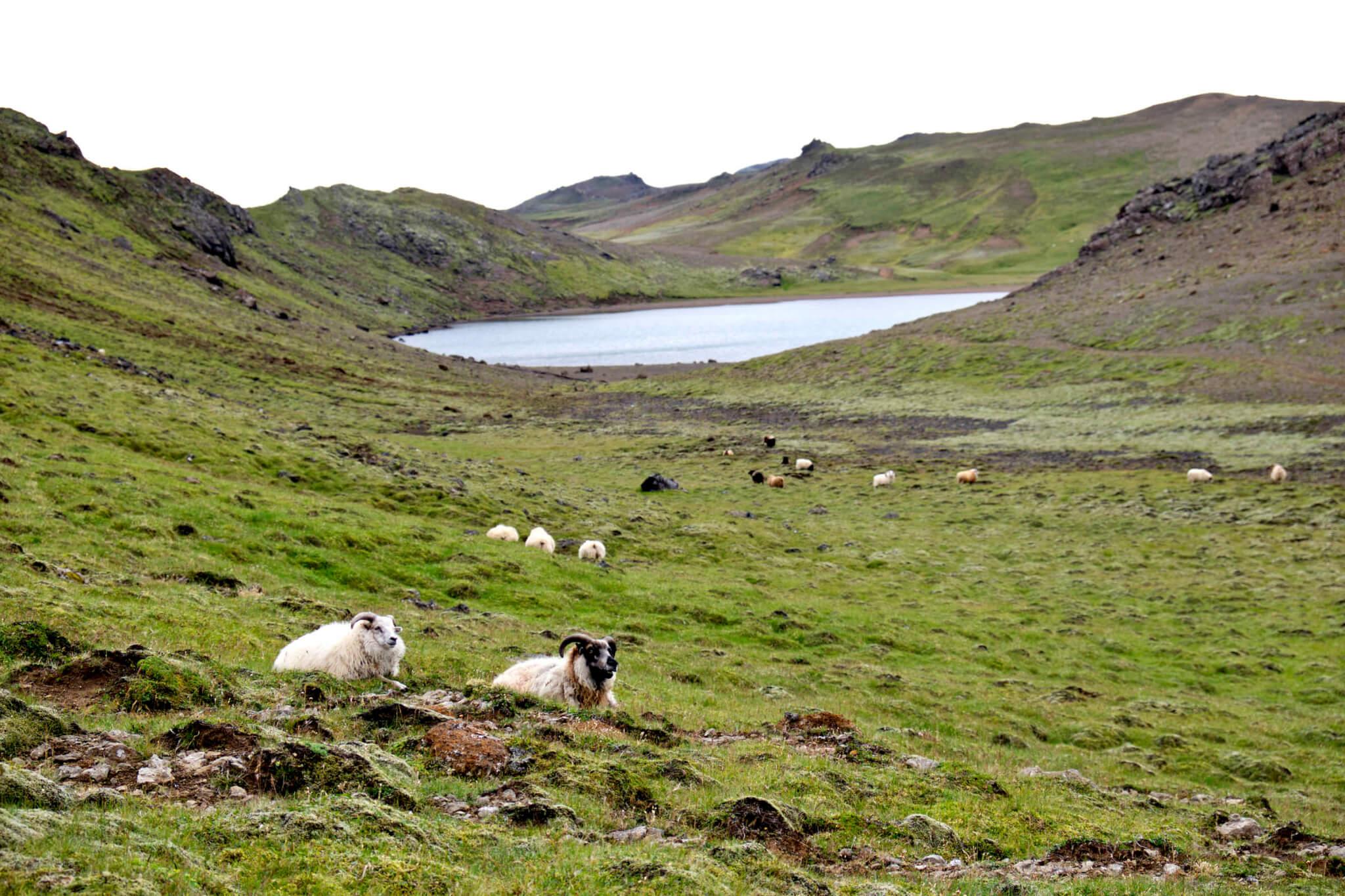 Wandern Reykjanes Island